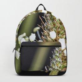 Buckhorn flower top close up Backpack