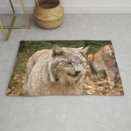 Fascinating Gorgeous Adult Lynx Walking Through Woods Close Up Ultra HD Rug