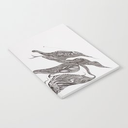 pangolin Notebook