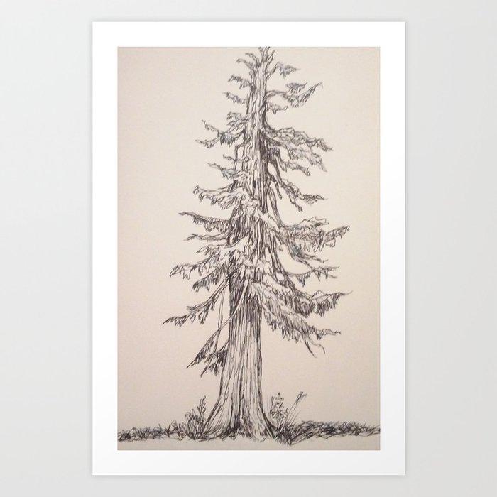 Old Cedar In Ink Art Print