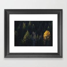 Fall at Trillium Lake, OR Framed Art Print