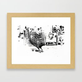 Rodeo Bull Riding Champ Framed Art Print