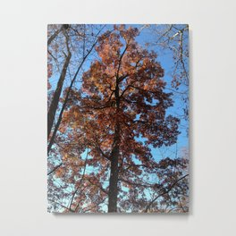 Oak Tree at Dawn Metal Print