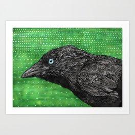 Jackdaw Art Print