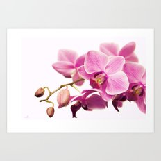 the pink beauty Art Print
