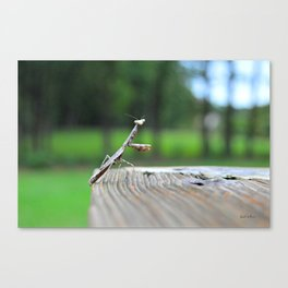 Heres looking at you... Canvas Print