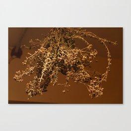 drying oregano Canvas Print