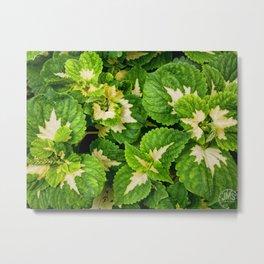 Green Leaves of Madison Avenue Metal Print
