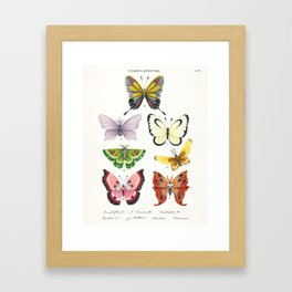 Butterfly Pokémon of the World Framed Art Print