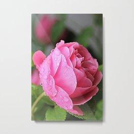 Rose Drops Metal Print