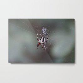 Itsy Bitsy Spider Metal Print