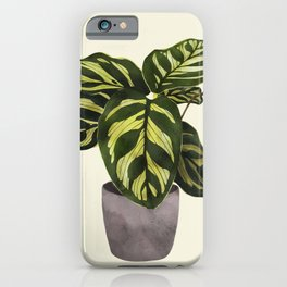calathea botanical interior plant iPhone Case