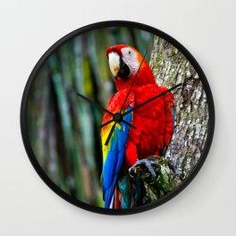 Scarlet Macaw Bird Costa Rica Wall Clock