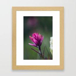 Pink Indian Paintbrush Framed Art Print