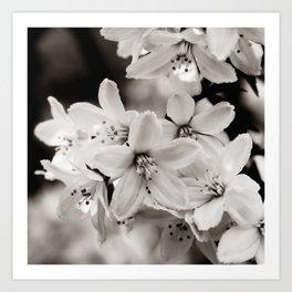 Little Whites ~ No.2 Kunstdrucke