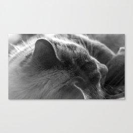 The Cat 5 Canvas Print