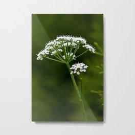 wild herbs 2 Metal Print