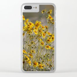 Brittle Bush 4 At Coachella Wildlife Preserve Clear iPhone Case