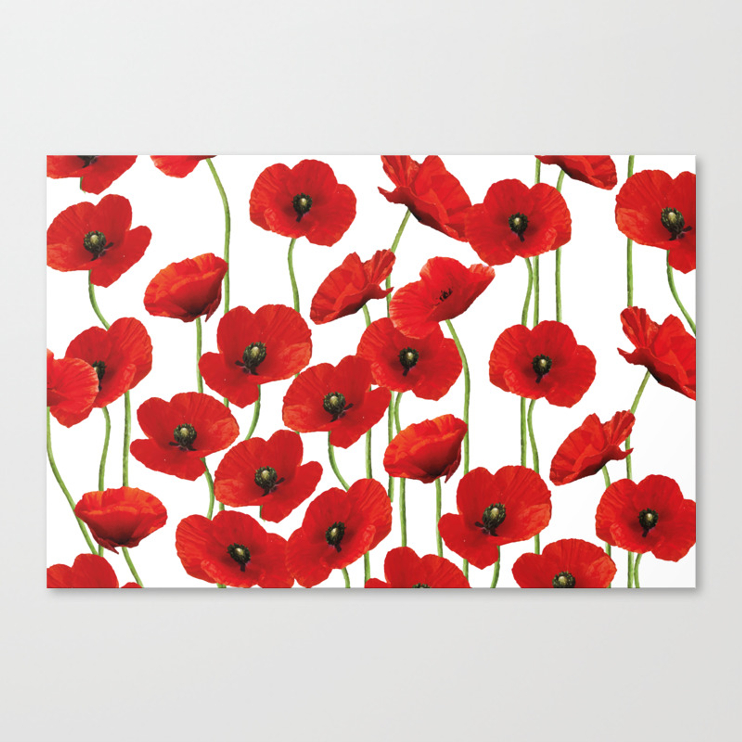 Poppies Flowers Red Field White Background Pattern Canvas Print By