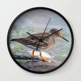 Sea Bird Wall Clock