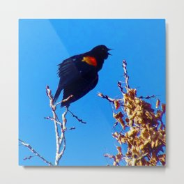 Rainbow Blackbird - Singing from the Heart - Jeronimo Rubio Photography 2016 Metal Print