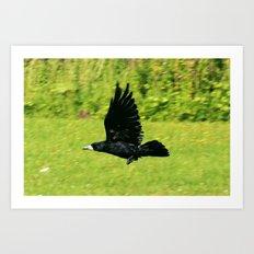 black crow in flight Art Print