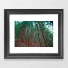 into the woods 03 Framed Art Print