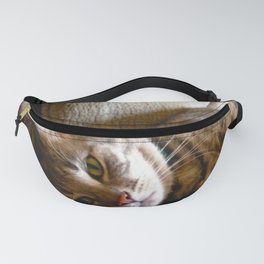 Pretty Kitty Fanny Pack