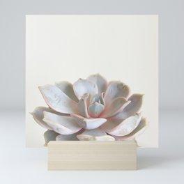 Pink Succulent Mini Art Print