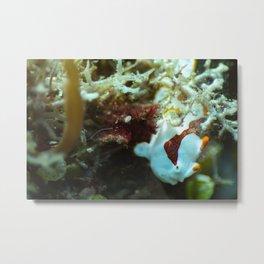 Juvenile Clown Frogfish Metal Print