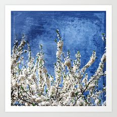 Cherry Blossoms on Blue Art Print