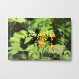 2 butterflies and a bee Metal Print