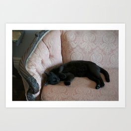 Hemingway's Cat on a Couch Art Print