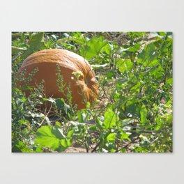 silly little pumpkin Canvas Print