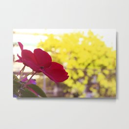 red flower spring colorful flowers Metal Print