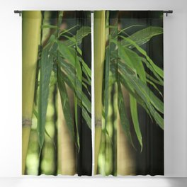 Bamboo Thicket Blackout Curtain