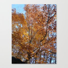 Upshot I - South Mountain Reservation Canvas Print