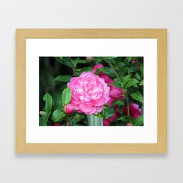 Camellia Joy Framed Art Print