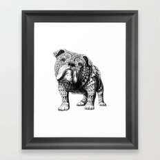 English Bulldog Framed Art Print