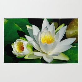 White Water Lily and Bud in Pond Rug