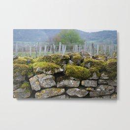 Vineyard Wall, Eastern France Metal Print