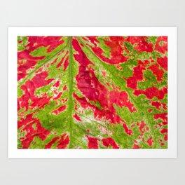 Florida Beauty Caladium Leaf Pattern Closeup Art Print