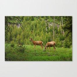 Wapiti In Yellowstone N P Canvas Print