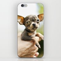 chihuahua iPhone & iPod Skins featuring Chihuahua by Orbon Alija
