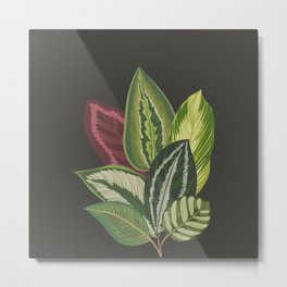 Green Leaves in Black Metal Print