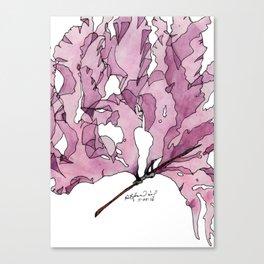 Watercolour Seaweed - Leptosomia rosea Canvas Print