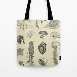 Vintage Anatomy Print Tote Bag
