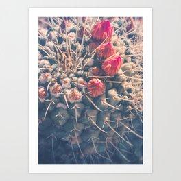 Dreamy Cactus Buds Art Print