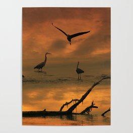 Herons at Sunset II Poster