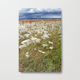 Cotton Grass, North York Moors National Park Metal Print